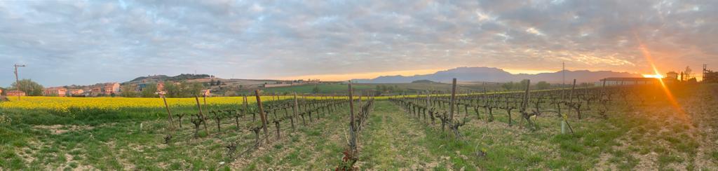 Bodegas Santalba Brotes La Rioja